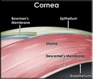 diagram of a cornea closeup